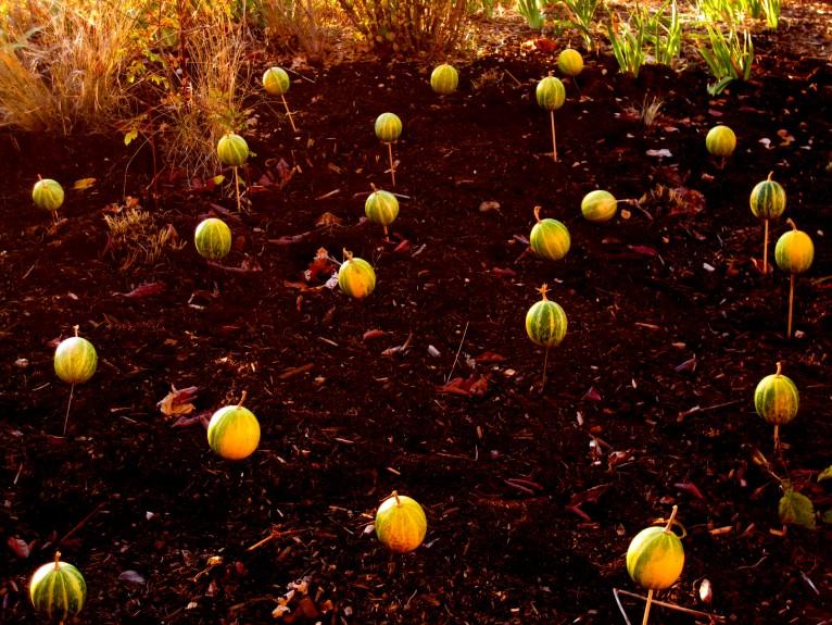 Gourds 5