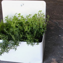 Bread Box herbs