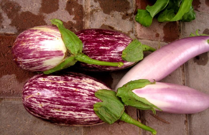 CGREEN_Eggplant