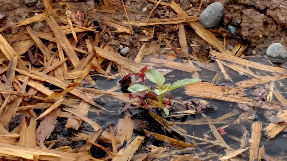 Soil Water Plants Life